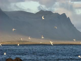 149 Vliegende vogels (erg mooi)