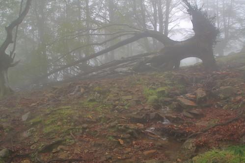 Parque natural de #Gorbeia #Orozko #DePaseoConLarri #Flickr -086
