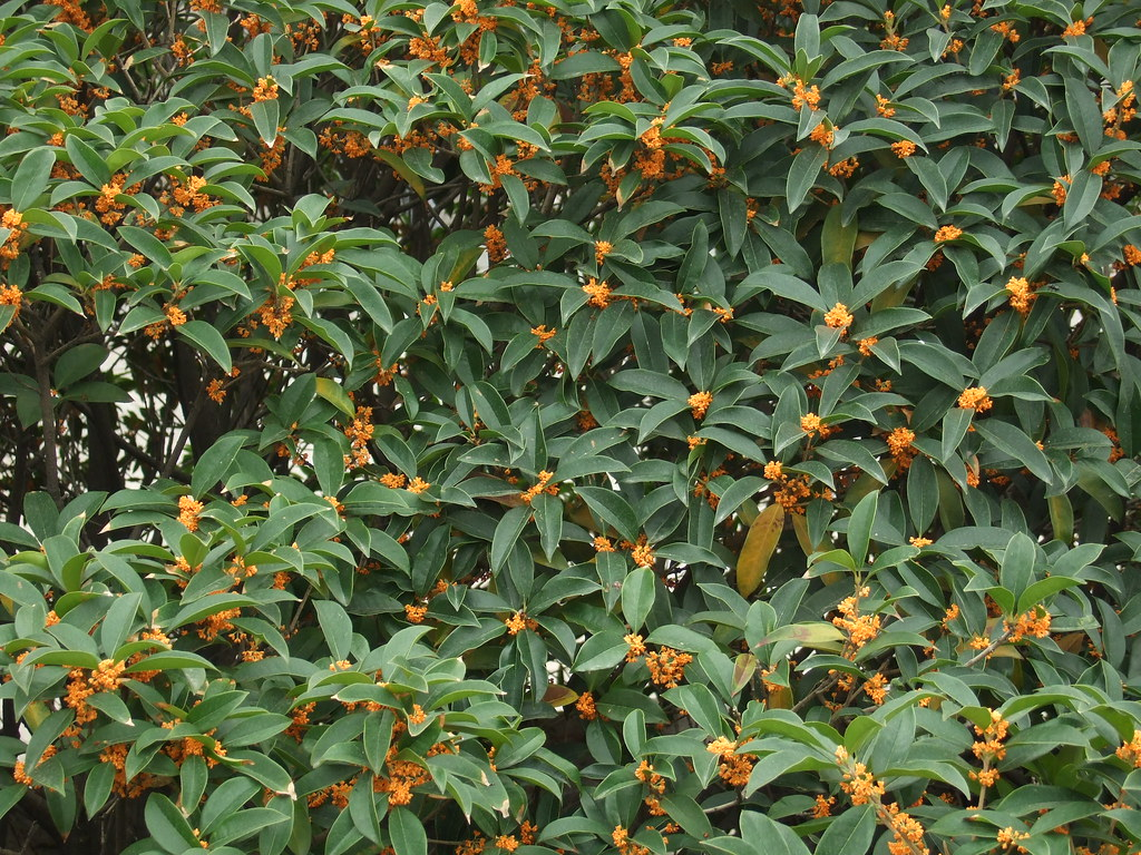 Xian Huaqing Hot Springs Flowers 2 Jdclarke57 Flickr