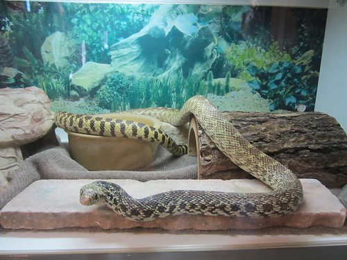 Snake at Nature Center | by Pictures by Ann