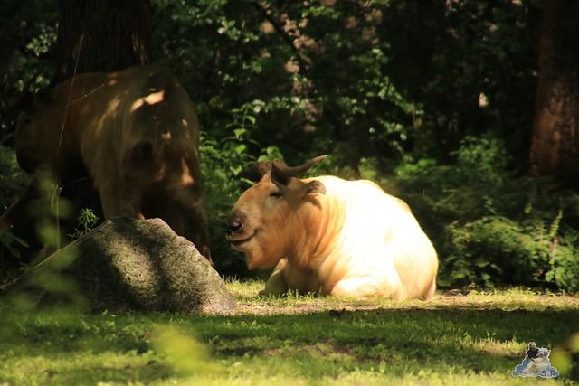 Tierpark Berlin 18.06.2016  071