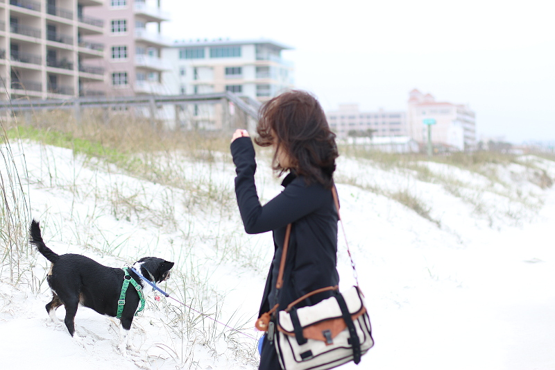 tips-for-traveling-with-pets-sandy-beaches-2