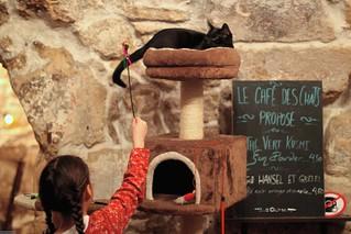 Cafe Des Chats Rue Sedain Paris