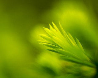 Green | by Thomas James Caldwell