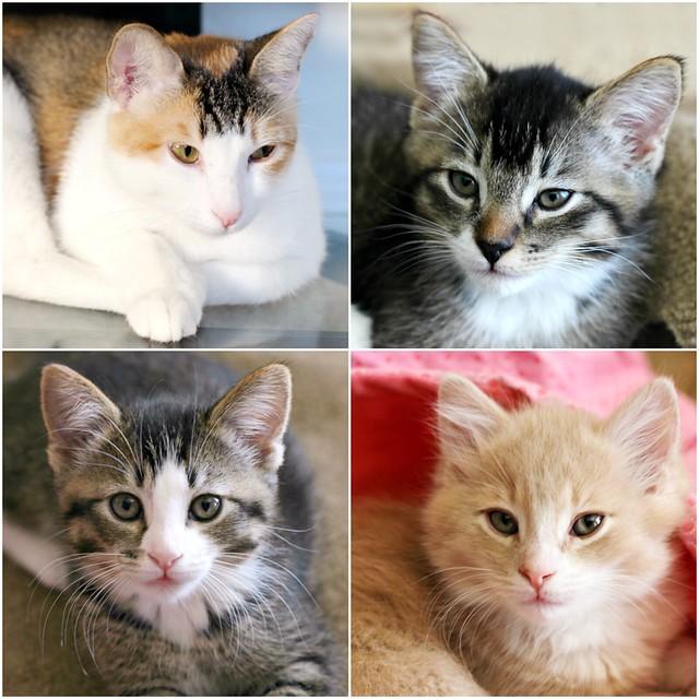 Cat Collage June 2016