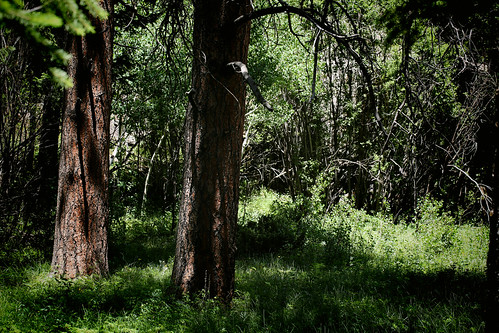 2016 6 26 - Wild Basin Forest - CB - DMTD - 9S3A0139 | by Rags Edward