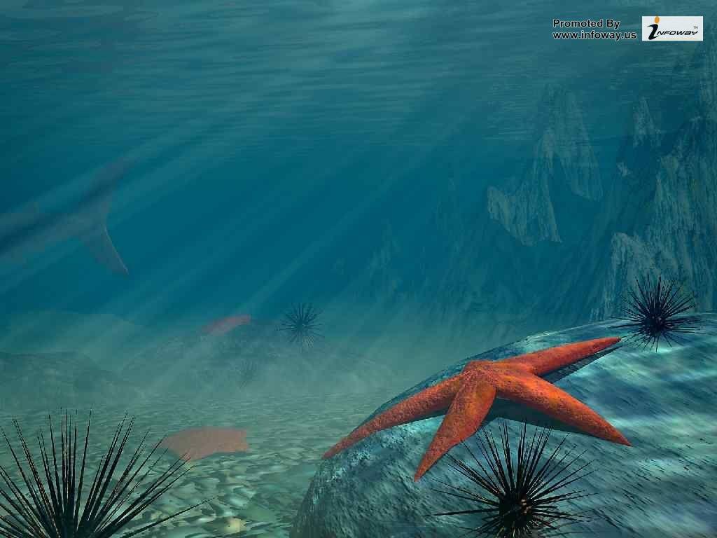 3d Sea Star Wallpaper 3d Sea Star Wallpaper Flickr
