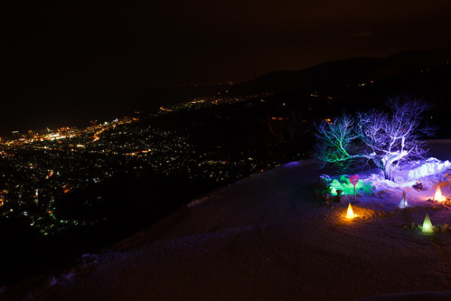 Illuminated alone 2015 / 雪あかり 一本桜