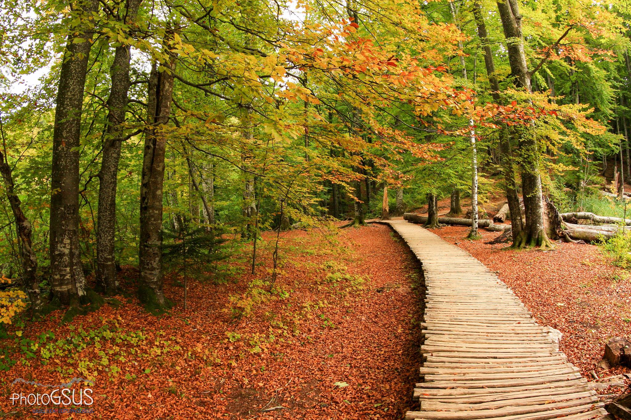 Autumn in Plitvice Lakes National Park - Croatia