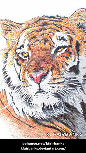 Tiger - Ballpoint Pen Drawing by K. Fairbanks | by graphix9