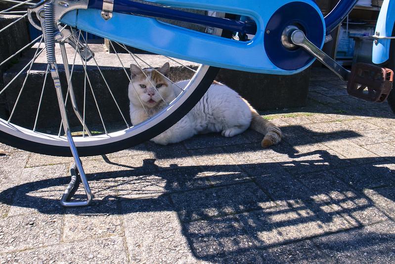 お猫様-20160513-2