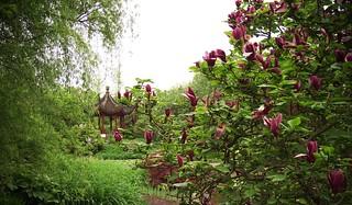 Loki Schmidt Garten Botanischer Garten Hamburg Danielsh Flickr