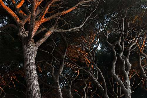 Neuronal Trees | by Jesus Solana Poegraphy