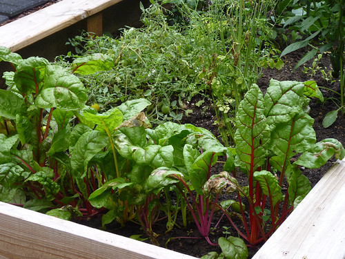 Raised Vegetable Garden Bed Elevated Planter Kit Grow Gardening