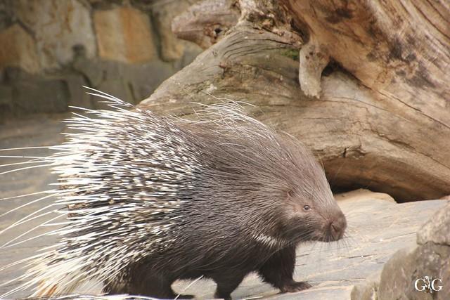 Sonntags-Besuch Zoo Berlin 19.06.201662