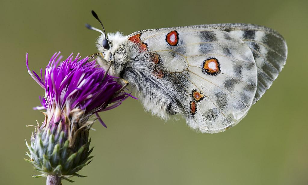 Fiori E Farfalle.Fiori E Farfalle 6 Pas Sionphoto Flickr
