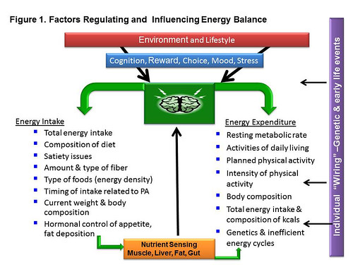 Energy Balance graphic | by Oregon State University