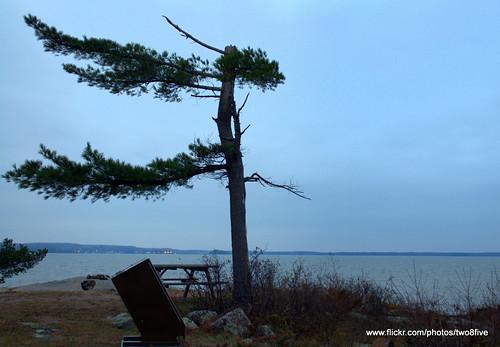 Lone Pine St Island Park