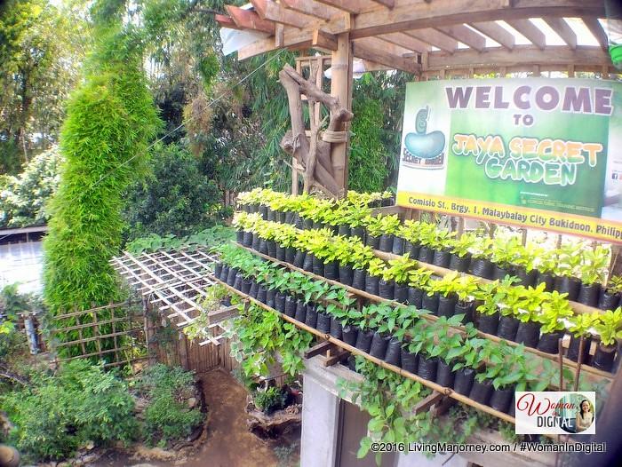 LivingMarjorney-Jaya-Secret-Garden-Crops