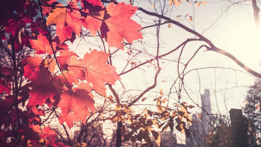 Картинки осень и город