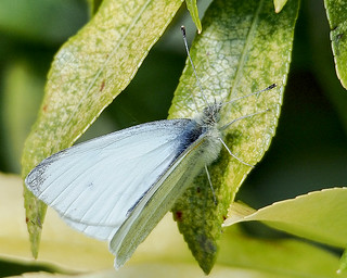 small white male | by Brian Wadie Photographer