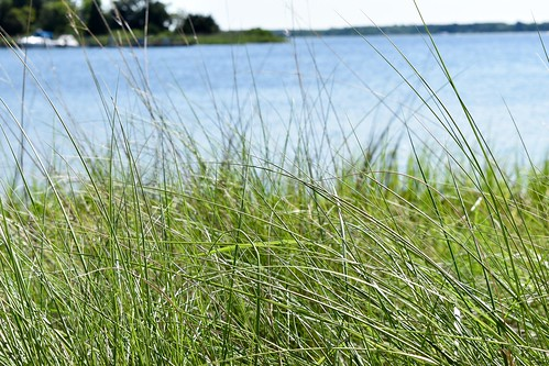 Around Campus: Living Shoreline