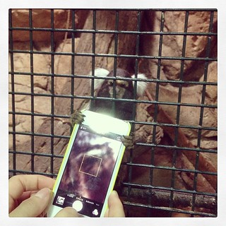 This Pygmy marmoset likes iPhones more than droids. | by teddyb