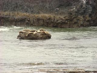 022 Sealrock