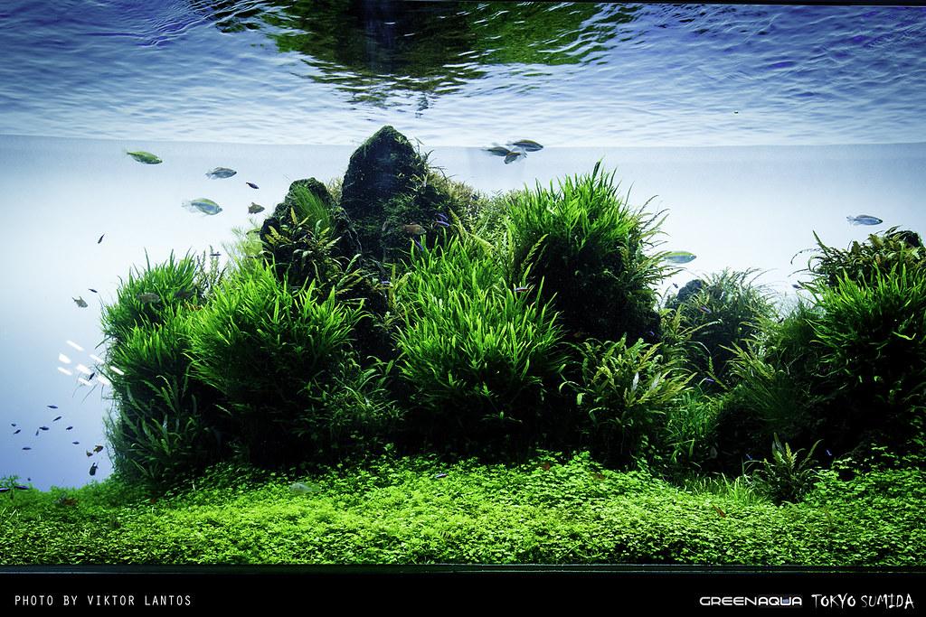 Sumida Aquarium Tokyo  Flickr