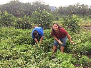 Politics of Food | by University of Hawaii - West O'ahu