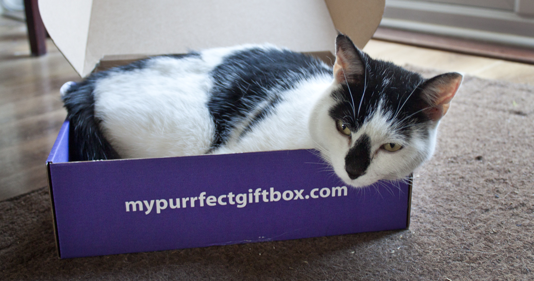 My Purrfect Giftbox Subscription | lifeofkitty.co.uk