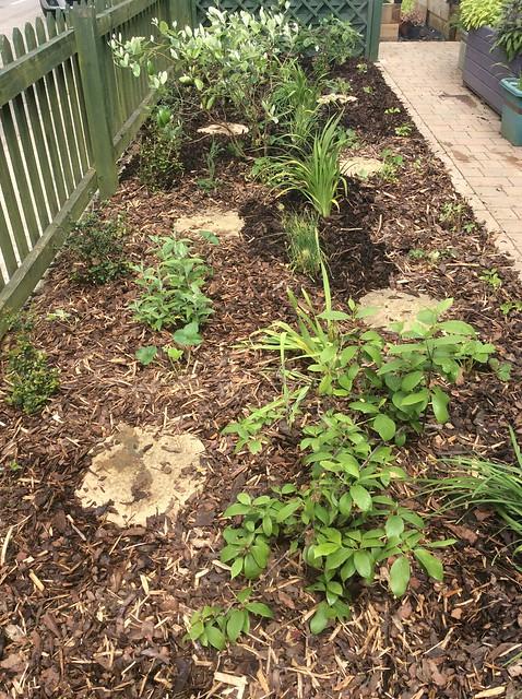 Front garden plants