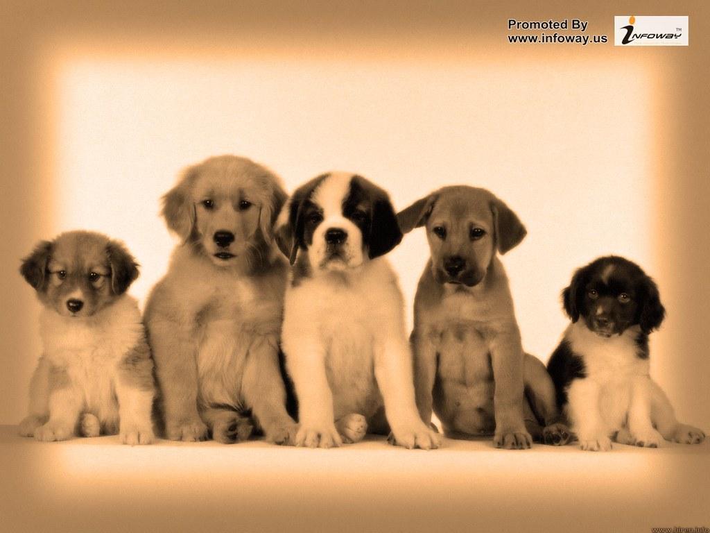 puppy potpourri | puppy potpourri | Jonty Cooper | Flickr