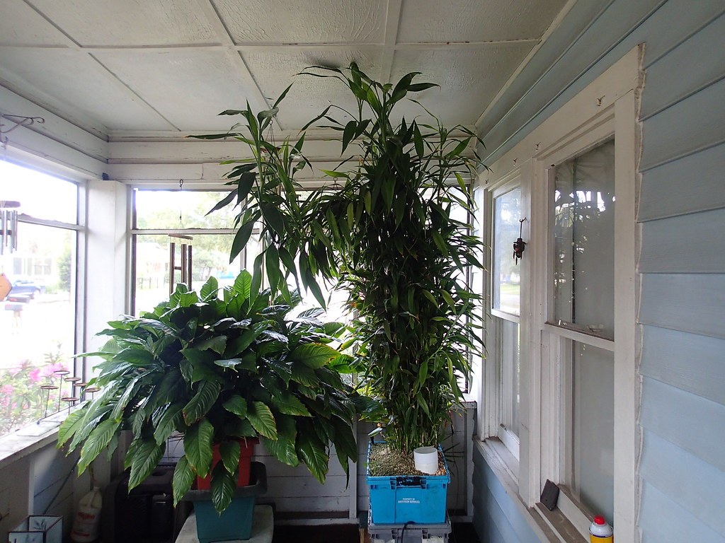 ... Hydroponic Indoor Plants | By Square Foot Hydroponics
