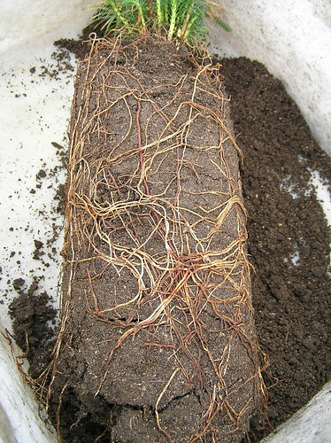 how to get rid of root rot