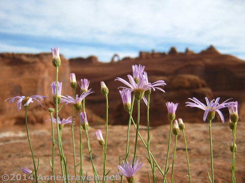 Flowers and Delicate Arch | by Anne's Travels