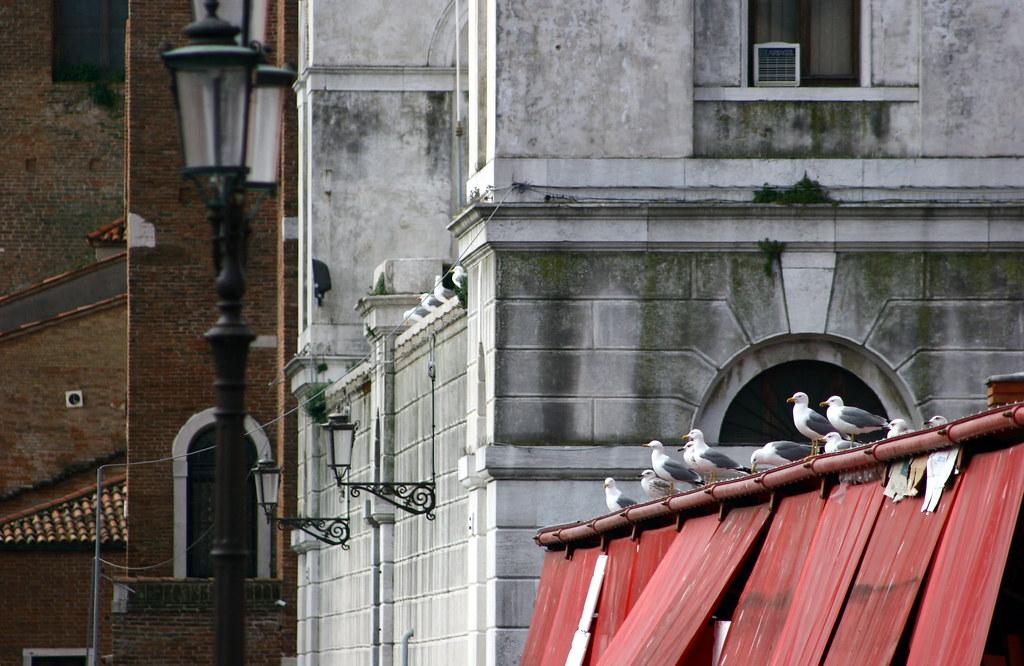 Seagulls @Chioggia