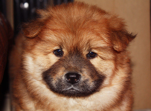 Kiara *.* puppy