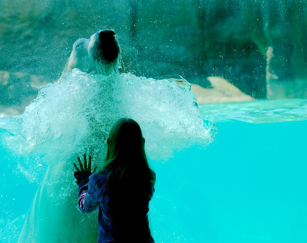 Polar Bear_13
