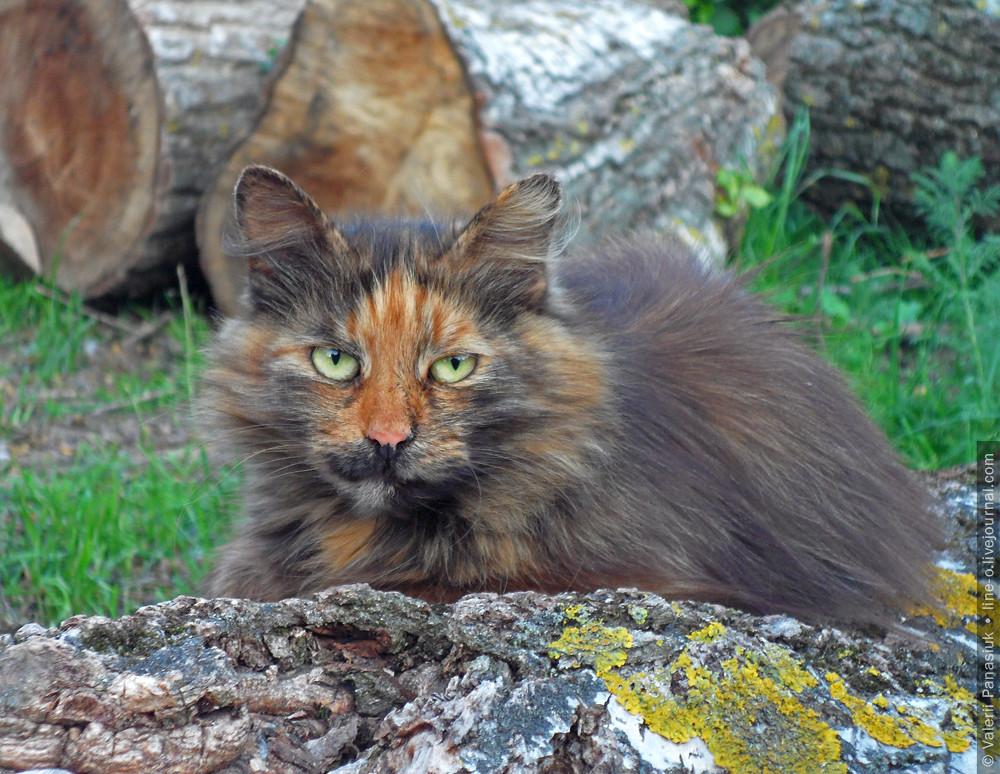 20160529_lutsk_cat_001