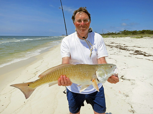 Redfish red drum dog island florida i caught this for Whiting fish florida