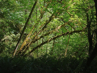 090 Wandeling bij Big Tree