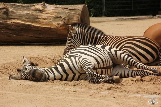 Sonntags-Besuch Zoo Berlin 19.06.201650