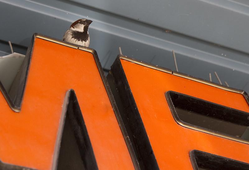 sign sparrow