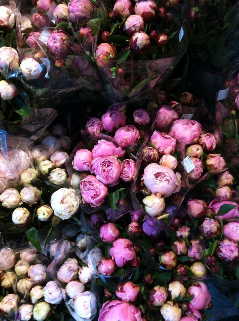 Blumen Im Juni June And August Flickr