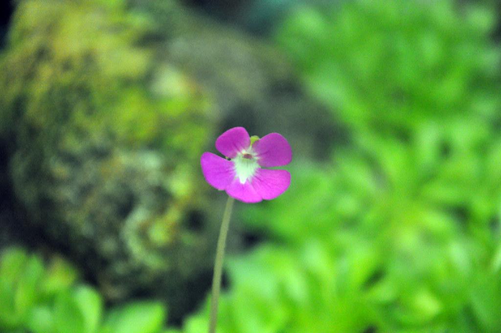 Ботанический сад DSC_0150