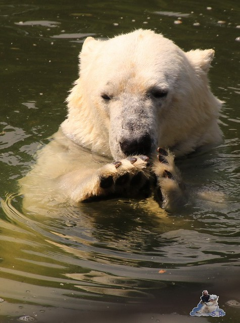 Tierpark Berlin 29.05.2016   052