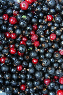 black currant jam | by David Lebovitz