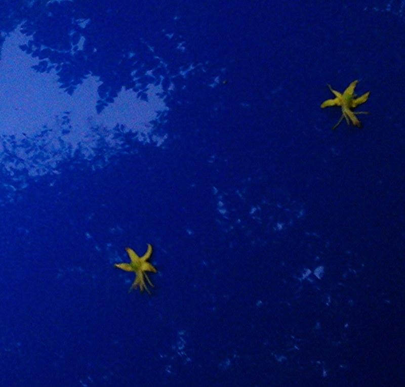 Flores estrella en un coche copia