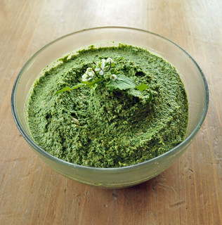 garlic mustard pesto | by jehoshaphatsgarden